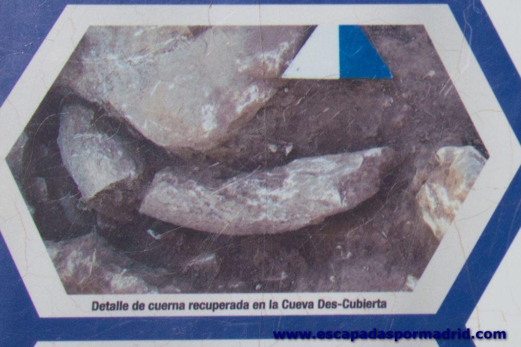foto de Cuerno encontrado en la Cueva Des-Cubierta