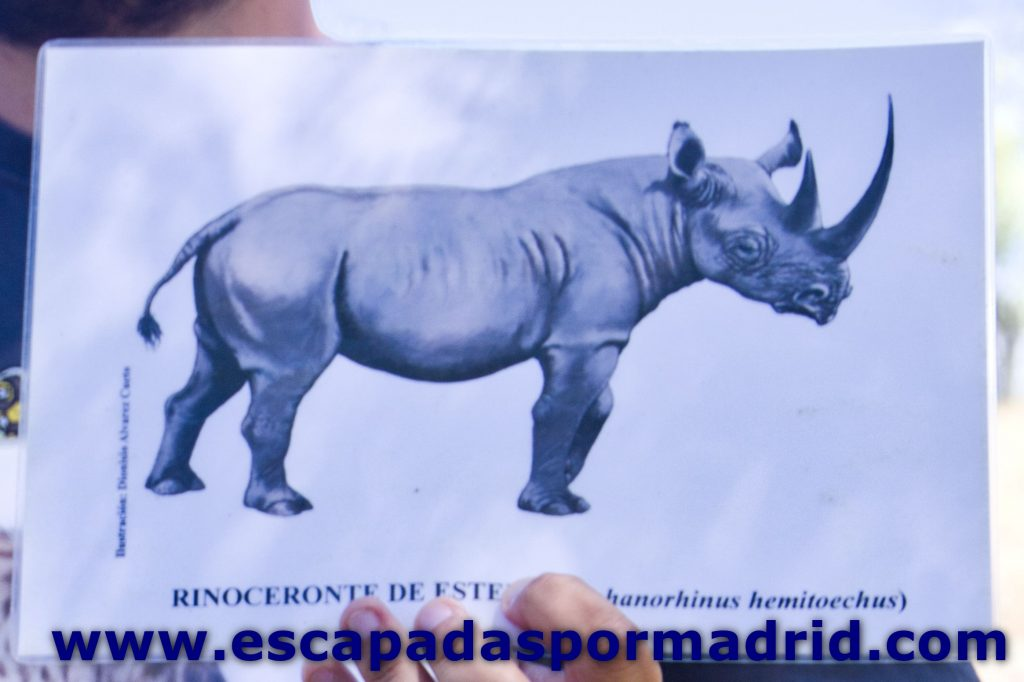 foto de Rinoceronte de Estepa